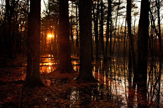 Photo: December Sun  Another shot from my excursion to Cold Harbor on Thursday. I ran into a hiker who told me he's never seen the water this high.  #365Project #SunsetSaturday