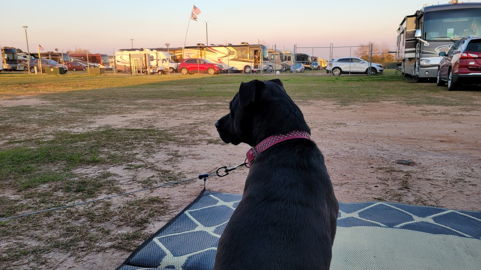 Dog sits and looks out at RVs parked in the distance