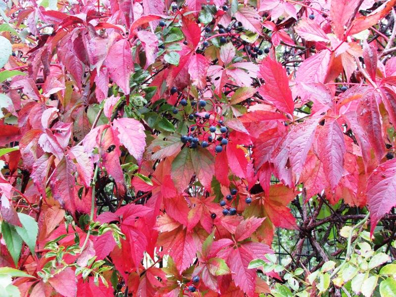 la bellezza dei colori di rossella_antonelli