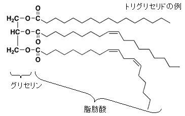 油脂の構造