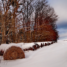 Bales of Hay by Teza Del - Nature Up Close Other plants ( hay, bales, winter hay )