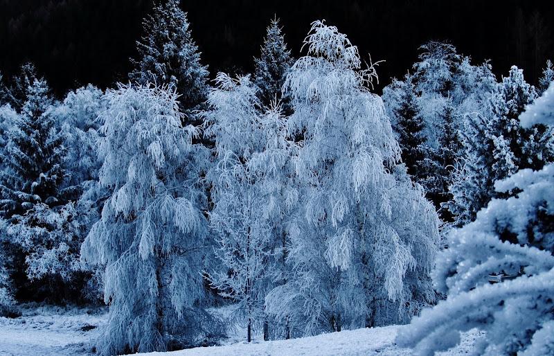 Il bosco incantato di Giorgio Lucca