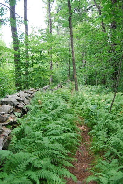 Photo: On the trail from Crow's Ledge to the summit of Mt. Wachusett.