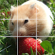 Puzzle Hamster - Cute Hamster Puzzle for PC-Windows 7,8,10 and Mac
