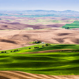 Dry Waves by Dean Mayo - Landscapes Prairies, Meadows & Fields ( palouse, farms, hills, washington, prairie )