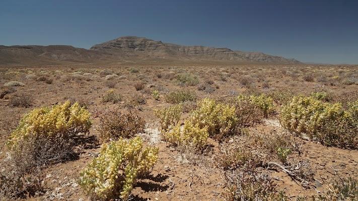 Sukkulenten in der Tankwa Karoo