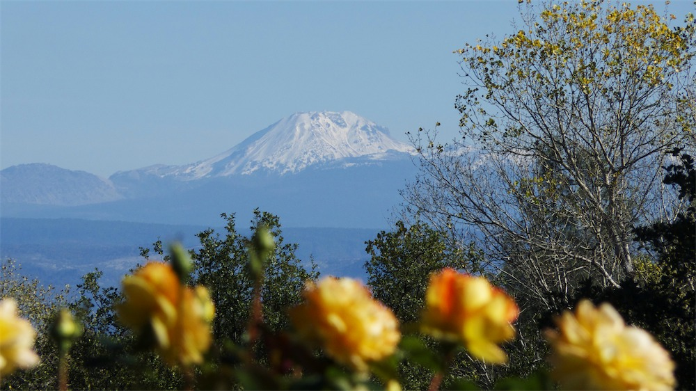 Flowers Look At Lassen.jpg