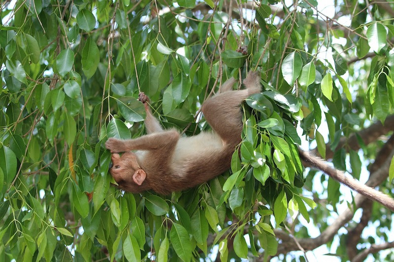 monkey hanging from a tree in samaipata bolivia