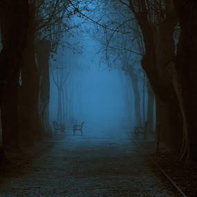 park by night and fog by Sanja Dedić - City,  Street & Park  City Parks ( , World_is_Blue, Monochromatic, color, one, tone, tones )