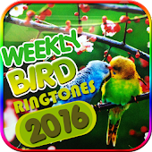 3D Bird Sounds and Ringtones
