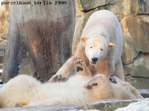 Photo: Nicht, dass Knut es nicht mag ;-)