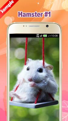 Cute Hamster Wallpapers - screenshot