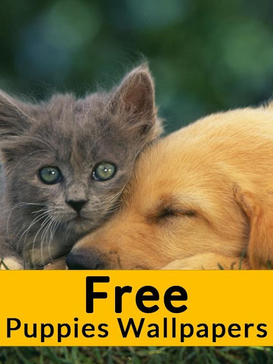 Pets Animals Wallpapers Free Android Aplicaciones Appagg