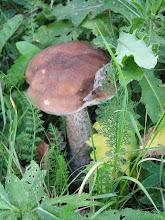Photo: C9269092 Slemien - grzyby w ogrodzonym osrodku Madahora
