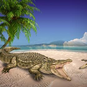 Crocodile Attack 3D  2016