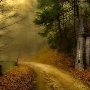 Beauty forest 6 (1 of 1).jpg