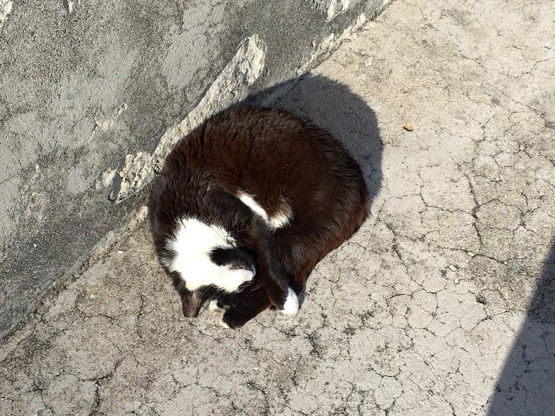 ドゥブロヴニク旧市街 猫