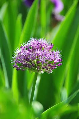 Viola ... o verde? di mukkapazza