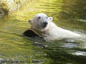 Photo: Knut hat das Spiegelbrett entdeckt ;-)
