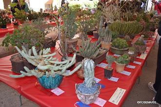 Photo: Euphorbia