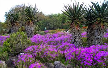 Photo: InKirstenbosch National Botanical Garden (http://www.places.co.za/html/kirstenbosch.html)