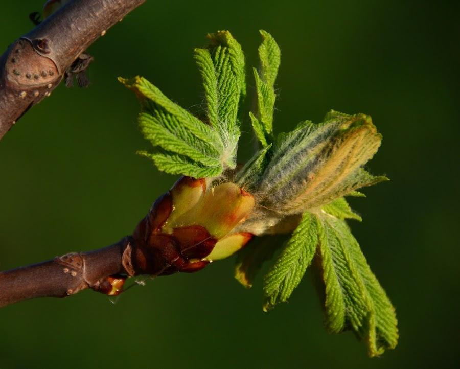 by Eugenija Seinauskiene - Nature Up Close Other plants (  )