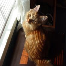 Photo: Mango at the window