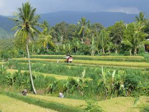 Photo: 20. Bali Island.