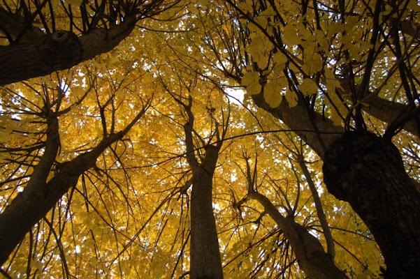 Sopra gli alberi..il cielo di claudia1963