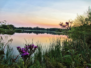 Photo: Purple flowers overlooking a lake sunset at Carriage Hill Metropark in Dayton, Ohio.