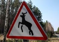 Осторожно! Олени могут быть быстрее вас