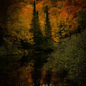 by Michael Haagen - Landscapes Forests ( fall, stream, reflections, foilege, colors,  )