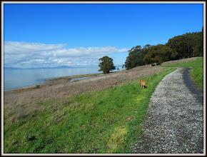 Photo: West side trail, Pt. Pinole CA