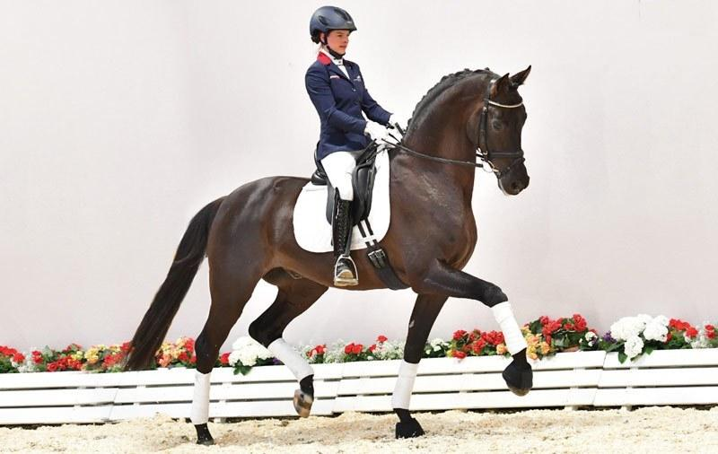 Oldenburg dressage horse tops sale at $594,000 - Horsetalk.co.nz