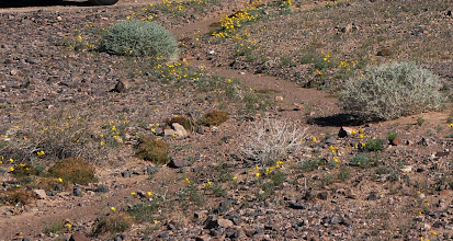 Photo: Desert wildflowers along a gully