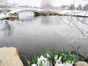 Photo: Spring snow on the bridge at Cox Arboretum in Dayton, Ohio.