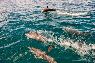 Photo: Dolphins come to say hi again
