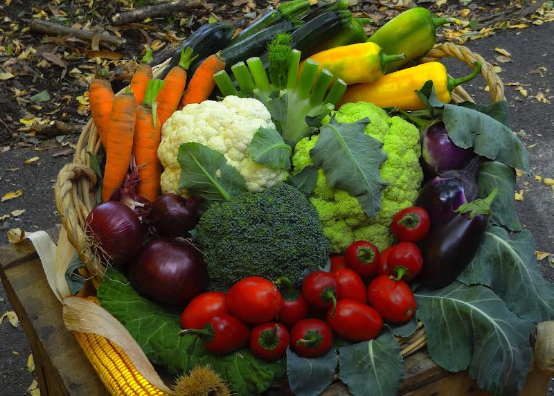 Verdure in bella mostra di utente cancellato