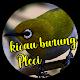 Kicau Pleci Lengkap for PC-Windows 7,8,10 and Mac