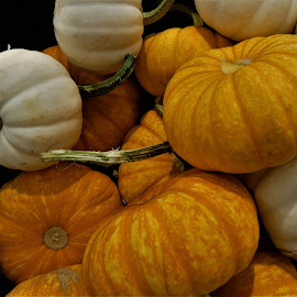 by Denise O'Hern - Public Holidays Halloween