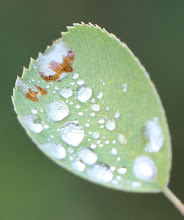 Photo: Water Droplet Magnifiers