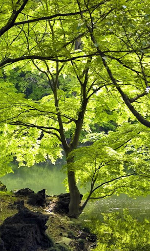 Bright shade of greenery