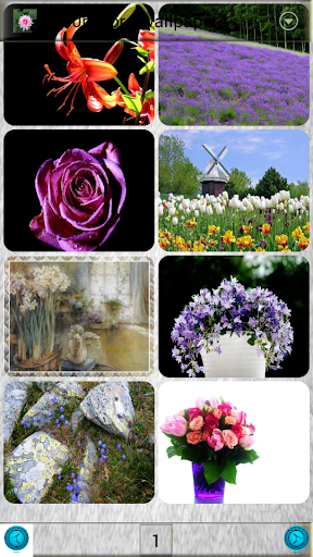 1080p Flora Wallpapers