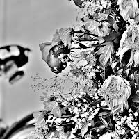Armonia di fiori di