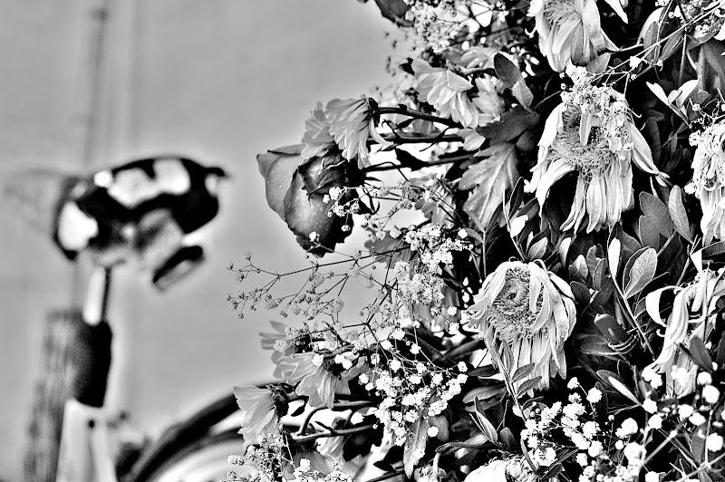 Armonia di fiori di squalotoro
