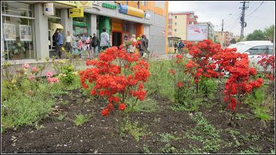 Photo: 2016.05.16 - d pe Calea Victoriei