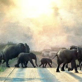 Abbey Road by Bjørn Borge-Lunde - Digital Art Animals ( wild animal, elephants, wilderness, animals, nature, wildlife, africa )