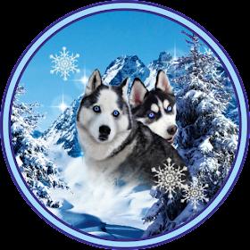 Лучшие Собаки Хаски Живые Обои