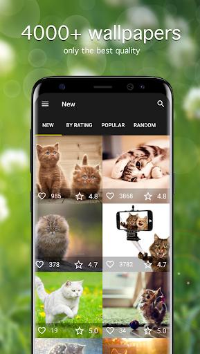 Cat Wallpapers & Cute Kittens ss1