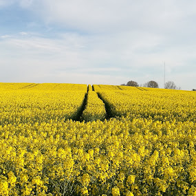 by Karl Erik Straarup - Landscapes Prairies, Meadows & Fields
